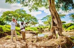 Walking Safari to Orangier River