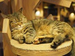 猫カフェモカ池袋西口店