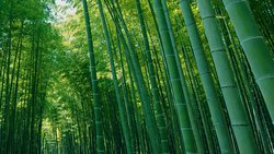 Four Seasons Bamboo Forest Wakayama Farm