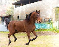 Curro. Uno de los caballos mas elegantes que posee el Picadero o Rancho.