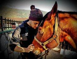 Uno de los colaboradores del Picadero o Rancho mimando al semental de la familia; Varón.
