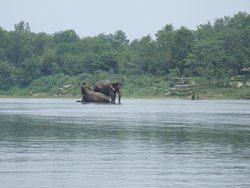 The Elephant swimming with couple at Rapati River .