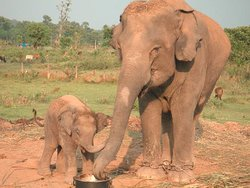 The elephant mom enjoying on her children