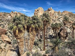 Lost Palms Oasis Trail