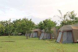 Standard camping safari