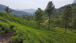 Tea plantations, Mysore Palace, Varkala Beach, Abi in an ancient hermit's cave called Muniyara.