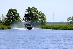 Zooming through the beautiful swamps of New Orleans on one of our high powered airboats!