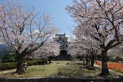桜と天守閣