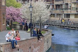 Spring has arrived - Let's Go Punting