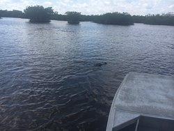 Small boat grassland/mangrove tour
