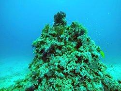 Blue Submarine Egypt