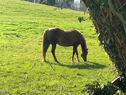 Grazing Horse just off the trail