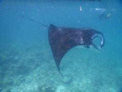 La meraviglia della fauna marina che abbiamo trovato