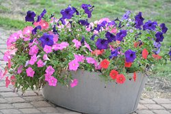Colourful, cheerful flowers