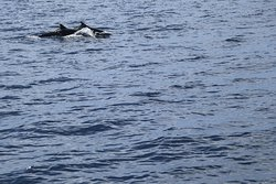 Great dolphin watching tour