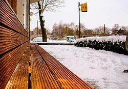 Mirabelle im Winter