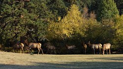 A bull elk and his harem wandered right through the meadow behind our cabin. And the aspens and creek willows were beautiful.