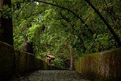 El camino a la cascada