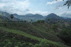 Les premières pentes défrichées par les cultivateurs colombiens