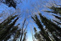 Enjoy walking through our woods.
