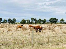 路過的牧場