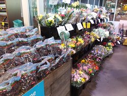 Grades and Flowers for Sale