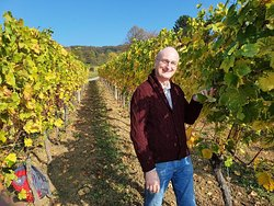 Alsace wine tour. Come and join us in a vineyard as part of your tour. wineweinvinovin.
