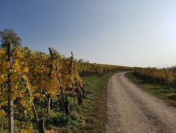 Alsace wine tour. Come and visit some of the most beautiful vineyards Alsace has to offer. wineweinvinovin.
