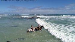 Gansbaai & Pearly Beach Horse Trails