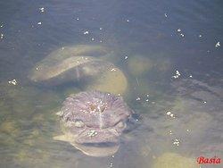 Park Ujazdowski, taaką rybkę też można dostrzec w stawie