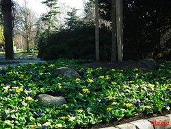 Park Ujazdowski, wiosna