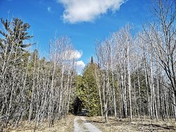 A beautiful entrance to the Point Loop area at Ken Reid Conservation Area.