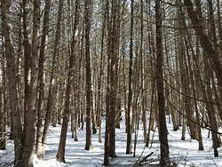 The Cedar Forest at Ken Reid Conservation Area offers a magical area where light and shadow are at their most magnificent.