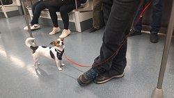 Pueden viajar las mascotas