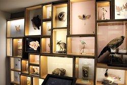 Kunterbunte Sammlung heimischer Tiere