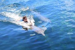 Amor a primera vista. Delfines!!!