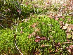 Cranesville Swamp Nature Preserve