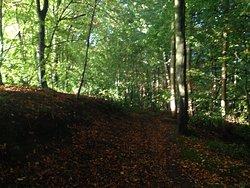 Kingsford Forest Park