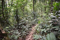 A wild trail in the lowland rainforest