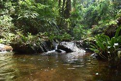 A creek in the lowland rainforest