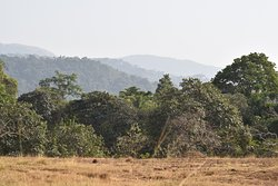 Forest-savanna transition in the lowland