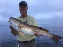 Spring Break Nearshore Gulf Cobia and Inshore Bay Redfish!!