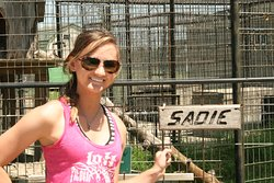 My daughter turned intern and tour guide saving Tiger Lives!