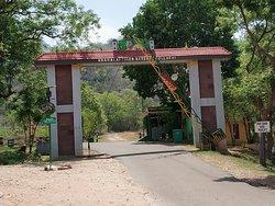 Topslip Tiger Forest