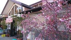 道の駅に桜が咲いていた