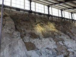 Quarry wall - hundreds and hundreds of bones