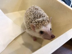 Tom's Mr. Hedgie