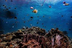 Sea Gypsy Divers