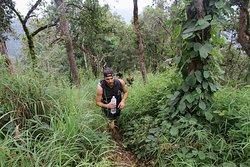 Trekking in the Jungle