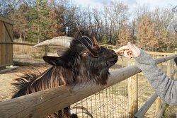 Parc Animalier des Gorges de l'Ardeche